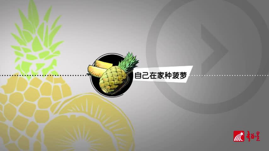 自己在家种菠萝logo版